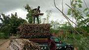 Treated Hybrid TME 419 Cassava Stems Available | Feeds, Supplements & Seeds for sale in Oyo State, Eruwa