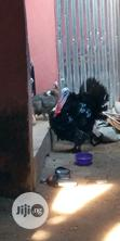 Geese and Turkey | Livestock & Poultry for sale in Obio-Akpor, Rivers State, Nigeria