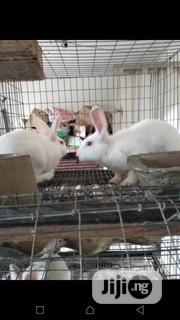 Pet Bunnies For Sale | Livestock & Poultry for sale in Lagos State, Lagos Mainland