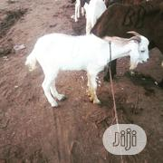 Premium Goat Meat Supply   Livestock & Poultry for sale in Lagos State, Magodo