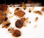 The Best Bed Bugs Eradication And Fumigation Services | Cleaning Services for sale in Lagos State, Lekki Phase 1