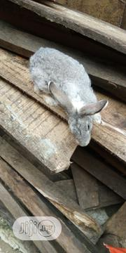 Looking For A New Home | Other Animals for sale in Kwara State, Asa