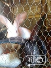 High Quality Hyla, Nzw, American Chinchilla Rabbits For Sale | Livestock & Poultry for sale in Ogun State, Ewekoro