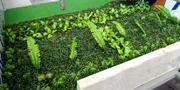 Artificial Boxwood Hedge Panel | Landscaping & Gardening Services for sale in Lagos State, Ikeja