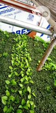 Artificial Boxwood Wreath | Landscaping & Gardening Services for sale in Ikeja, Lagos State, Nigeria