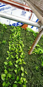 Artificial Boxwood Wreath   Landscaping & Gardening Services for sale in Lagos State, Ikeja