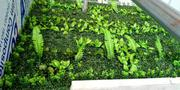 Synthetic Boxwood Shrub   Landscaping & Gardening Services for sale in Lagos State, Ikeja