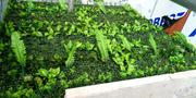 Artificial Boxwood For Walkways   Landscaping & Gardening Services for sale in Lagos State, Ikeja