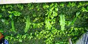 Boxwood For Walkway   Landscaping & Gardening Services for sale in Lagos State, Ikeja