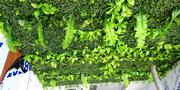Artificial Boxwood For Gardens | Landscaping & Gardening Services for sale in Lagos State, Ikeja