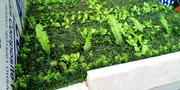 Synthetic Boxwood | Landscaping & Gardening Services for sale in Lagos State, Ikeja