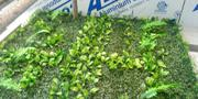 Synthetic Basic Boxwood | Landscaping & Gardening Services for sale in Lagos State, Ikeja