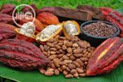 Palm Oil And Cocoa Seeds | Feeds, Supplements & Seeds for sale in Oyo State, Ibadan North