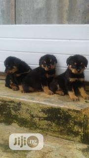 Baby Female Purebred Rottweiler | Dogs & Puppies for sale in Lagos State, Lagos Mainland