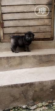 Baby Female Purebred Caucasian Shepherd Dog | Dogs & Puppies for sale in Lagos State, Lagos Mainland