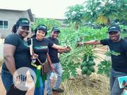 Farm Workers | Landscaping & Gardening Services for sale in Abuja (FCT) State, Jabi