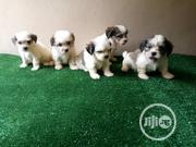 Baby Female Purebred Lhasa Apso   Dogs & Puppies for sale in Abuja (FCT) State, Gaduwa