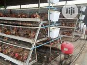 Old Layers For Sale | Livestock & Poultry for sale in Ogun State, Ado-Odo/Ota