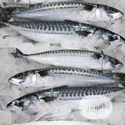 Titus Fish Is 15000 Thousand Bakerton | Fish for sale in Lagos State, Agege