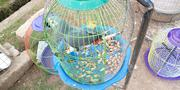 One Talking Parrot For Sale | Birds for sale in Kaduna State, Zaria
