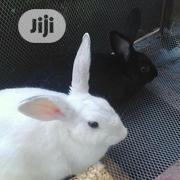 GOE Animals - Good And Healthy Rabbits For Sale | Livestock & Poultry for sale in Ondo State, Akure