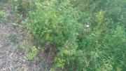Full Plot of Land for Sale | Land & Plots For Sale for sale in Ondo State, Akure South