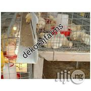 Day Old Battery Cage Layers, Broilers Etc | Farm Machinery & Equipment for sale in Ogun State, Ifo