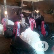18kg Big Healthy Hybrid Turkeys Available For Sale | Livestock & Poultry for sale in Lagos State, Lagos Island
