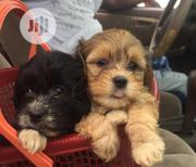 Baby Female Purebred Lhasa Apso | Dogs & Puppies for sale in Abuja (FCT) State, Karmo