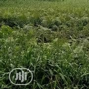 Land at Meiran for Sale   Land & Plots For Sale for sale in Lagos State, Alimosho