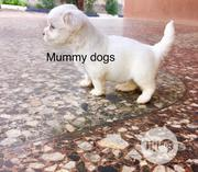 Baby Female Purebred Lhasa Apso | Dogs & Puppies for sale in Oyo State, Ibadan North