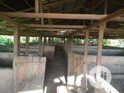 Pig Farm With Housing For Rent | Commercial Property For Rent for sale in Edo State, Ikpoba-Okha
