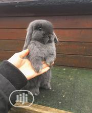 Bunnies For Sale | Other Animals for sale in Lagos State, Lagos Mainland