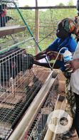 Veterinary Services | Pet Services for sale in Abeokuta South, Ogun State, Nigeria
