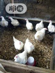 Chickens8kg | Livestock & Poultry for sale in Ogun State, Ijebu Ode