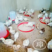Boiler Chicken Available   Livestock & Poultry for sale in Lagos State, Badagry