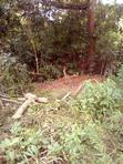 12 Acres At Atan Village Along Iseyin/Ibadan | Land & Plots For Sale for sale in Oyo State, Nigeria