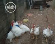 Big Broiler Chickens For Sale | Livestock & Poultry for sale in Ogun State, Ifo