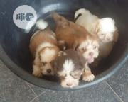 Cute Purebreed Lhasa Apso Puppies | Pet's Accessories for sale in Lagos State, Agege