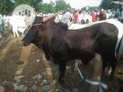 Big Brown Cow | Livestock & Poultry for sale in Sokoto State, Sokoto North