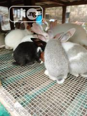 Rabbit Growers For Sale | Livestock & Poultry for sale in Lagos State, Ifako-Ijaiye
