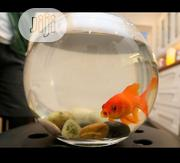 Fish Bowl Kit For You | Pet's Accessories for sale in Lagos State, Surulere