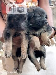 Baby Female Purebred German Shepherd Dog | Dogs & Puppies for sale in Lagos State, Lagos Mainland