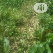 4 Plot Of Land At Opebi Ikeja Lagos | Land & Plots For Sale for sale in Lagos State, Ikeja