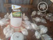 Broiler Chicken At 3kg | Livestock & Poultry for sale in Lagos State, Mushin