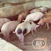 Get Your Pigs At A Cheaper Price | Livestock & Poultry for sale in Ondo State, Akure South