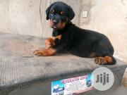 Baby Male Purebred Rottweiler | Dogs & Puppies for sale in Lagos State, Lagos Mainland