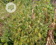 Grannia Leaf Chicken Medicine | Feeds, Supplements & Seeds for sale in Abuja (FCT) State, Jukwoyi