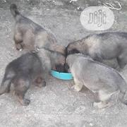 Baby Female Mixed Breed | Dogs & Puppies for sale in Enugu State, Enugu South