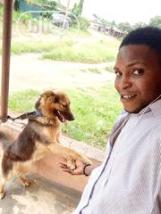 Adult Female Purebred German Shepherd Dog | Dogs & Puppies for sale in Ogun State, Odeda